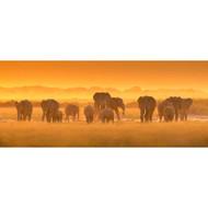 Golden Light with Elephants by David Hua