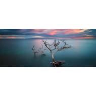 Lone Kiawe by Todd Kawasaki