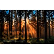 Spirit Forest