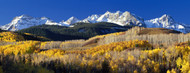 Privacy Screen: Rocky Mountains Aspens in Autumn