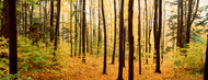 Privacy Screen: Trees in Chestnut Ridge Park Orchard Park