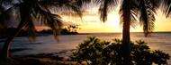 Privacy Screen: Kohala Coast Hawaii