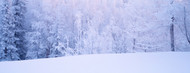 Standard Photo Board: Winter Scenic Alaska -AMER