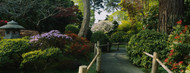Standard Photo Board: Plants in Japanese Tea Garden - AMER