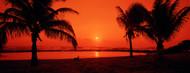 Privacy Screen: Silhouette of Palm Trees at Dusk Kauai
