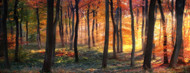 Privacy Screen: Autumn Woodland Sunrise by Photokes