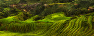 Standard Photo Board: Waves of Rice - The dragon's Backbone by Max Witjes - AMER