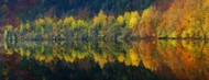 Standard Photo Board: Autumnal Silence by Burger Jochen - AMER