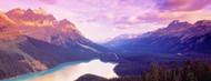 Privacy Screen: Peyto Lake Alberta Canada