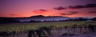 Privacy Screen: Vineyard At Sunset, Napa Valley