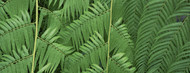 Privacy Screen: Ferns Botanical Gardens Buffalo Erie County
