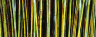 Privacy Screen: Bamboo Trees