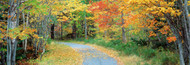 Extra Large Photo Board: Walking Path Acadia National Park - AMER