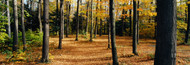 Extra Large Photo Board: Chestnut Ridge Park Orchard Park NY USA - AMER