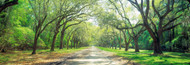 Extra Large Photo Board: Live Oaks and Spanish Moss Savannah - AMER