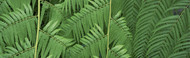 Extra Large Photo Board: Ferns Botanical Gardens Buffalo Erie County - AMER - INDY