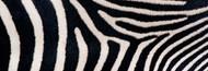 Standard Photo Board: Close-up Greveys Zebra Stripes - AMER - INDY