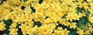 Standard Photo Board: Petunias in Botanical Garden - AMER