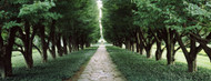 Standard Photo Board: Trees in a Garden Niagara Fall Ontario - AMER