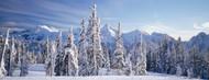 Standard Photo Board: Fir Trees Tatoosh Range Mt Rainier National Park - AMER