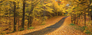 Standard Photo Board: Autumn Road Emery Park New York State - AMER