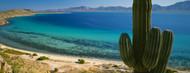 Standard Photo Board: Cordon Cactus Bay Of Conception - AMER