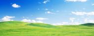 Standard Photo Board: Green Fields Whitman County - AMER