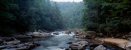 Standard Photo Board: Chattooga River Flowing Through Forest - AMER
