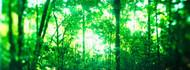 Trees in a Rainforest Costa Rica