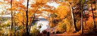 Trees at the Lakeside Great Sacandaga Lake Adirondacks
