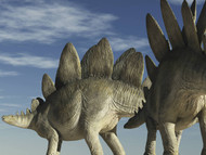 Two Stegosaurus Against A Blue Sky