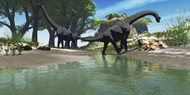 Brachiosaurus Dinosaurs Look For Food Along The Banks Of A Stream