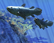 Two Coelacanth Fish Swimming Undersea