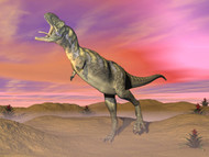 Aucasaurus Dinosaur Roaring In The Desert By Sunset