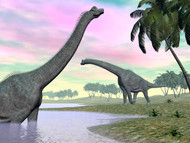 Two Brachiosaurus Dinosaurs In Landscape With Water And Palm Trees