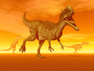 Three Monolophosaurus Dinosaurs In The Desert By Sunset