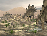 Stegosaurus Dinosaurs Searching For Water In A Desert Landscape
