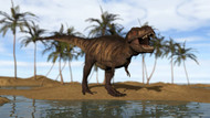 Tyrannosaurus Rex Standing On The Shoreline
