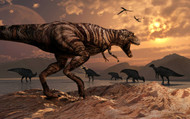 A T-Rex Plans His Attack On A Herd Of Parasaurolophus Dinosaur