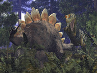An Allosaurus Stumbles Upon A Grazing Stegosaurus