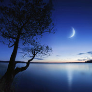 Silhouette Of A Lonely Tree In A Lake Against A Starry Sky and Moon