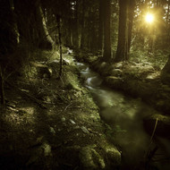Small Stream In A Forest At Sunset Pirin National Park Bulgaria