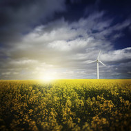 Wind Turbine In A Canola Field Against Cloudy Sky At Sunset Denmark