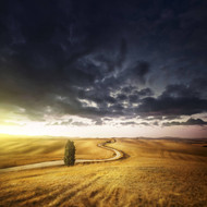 A Country Road In Field At Sunset and Moody Sky Tuscany Italy