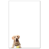 Yellow Labrador Retriever Dog Pack 1