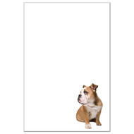 English Bulldog Dog Pack 1