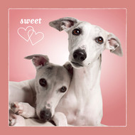Whippet Sweethearts Love Card