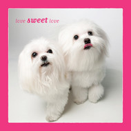 Maltese Love Sweet Love Card
