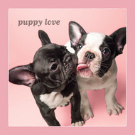 Frenchie Puppy Love Card