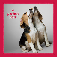 A Perfect Pair Beagle Love Card